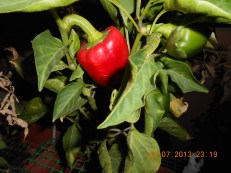 Peppers / Πιπεριές - Photo Credit: Camille Delcour 2013