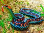 "3 – California Red-sided Gartersnake, Facebook page ""Some Amazing Facts"" https://www.facebook.com/someamazingfacts?fref=ts"