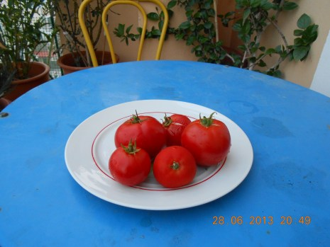 Τομάτες / Tomatoes – Photo Credit: Camille Delcour 2013