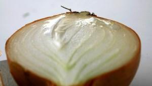 How to grow onions 9