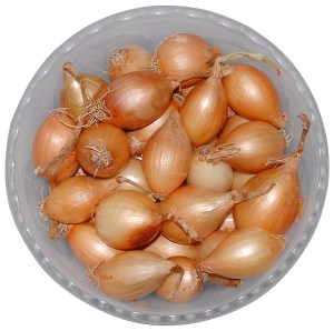 How to grow onions 16