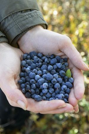 Quick Gluten-Free Blueberry Muffins