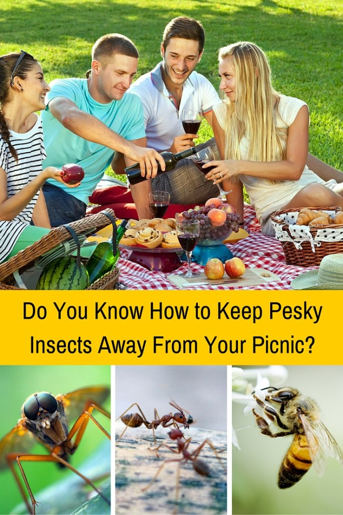 Do You Know How To Keep Pesky Insects Away From Your Picnic?