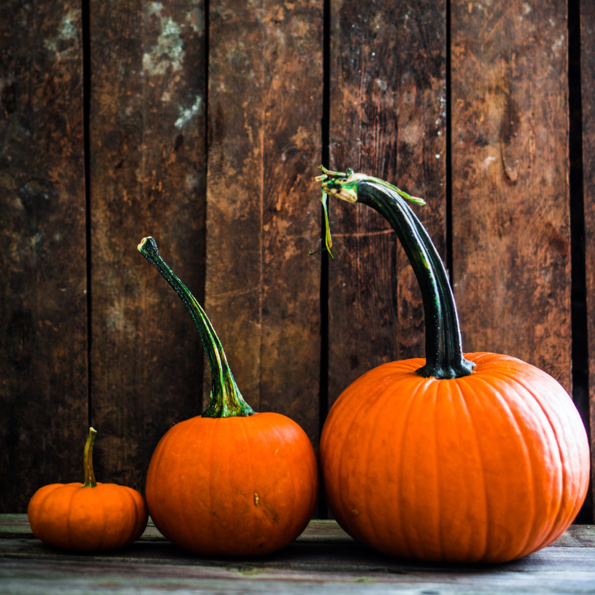 Colorful pumpkins on wooden background