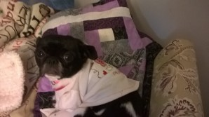 annabelle-likes-my-new-blanket