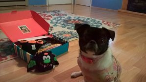 annabelle-with-her-pet-treater-box-october-2016