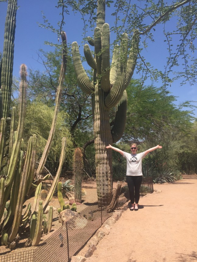 Giant cacti are everywhere!