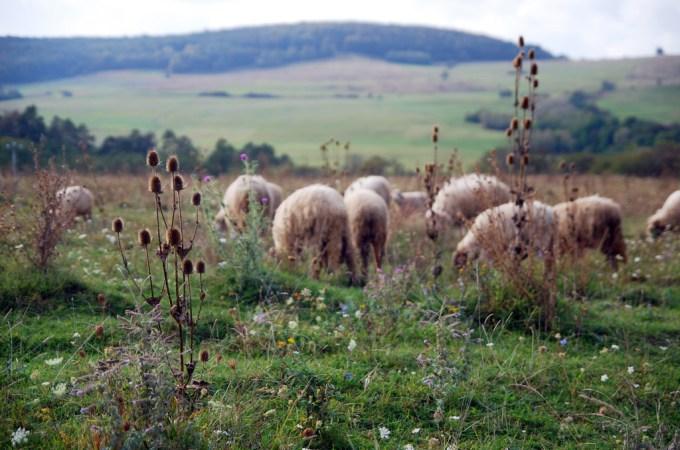 We're the Sheep, He the Shepherd