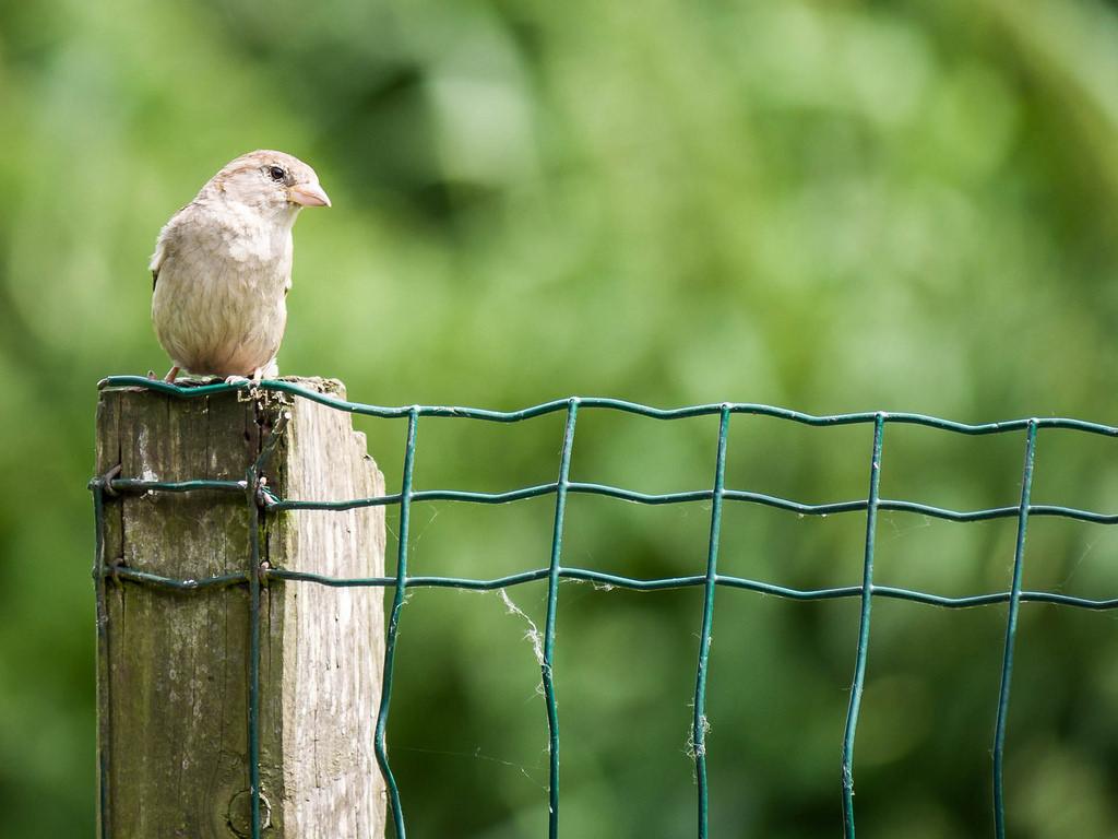 What Birds Can Teach Us