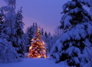 beautiful-christmas-tree-lights-forest-winter-snow-night_large-480x350