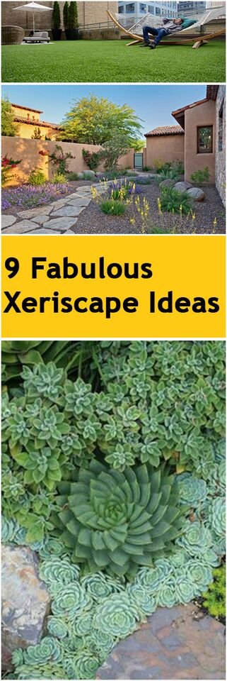 9 Fabulous Xeriscape Ideas ~ Bless My Weeds on Xeriscape Yard Ideas  id=28601