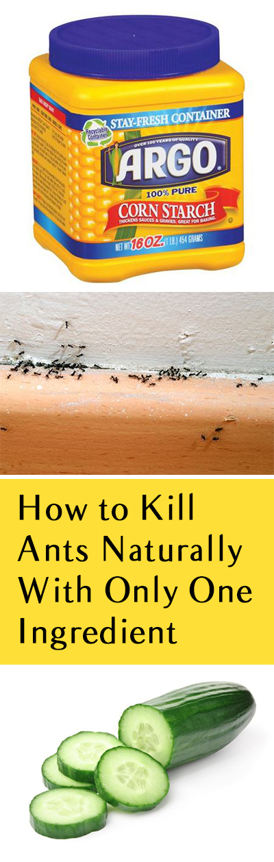 Natural Ant Repellent Top Ways To Get Rid Of Ants Yard