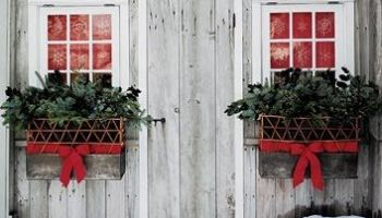 Ideas For A Winter Window Box Bless My Weeds