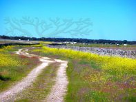 camino bordeado por paredes de granito adornado con flores