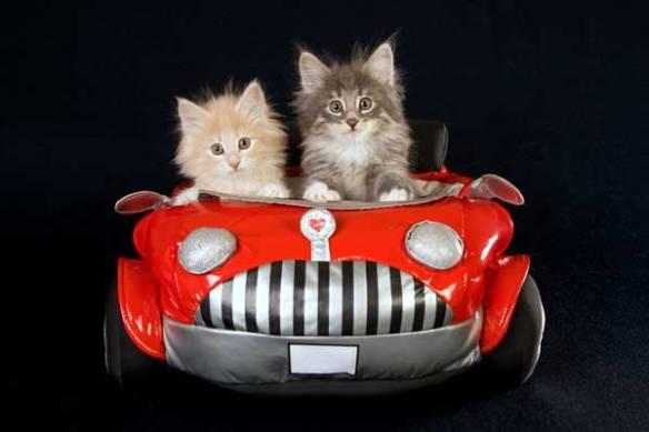 kittens-in-car