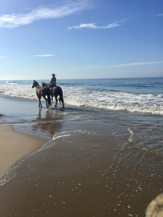 horses on the beach shore