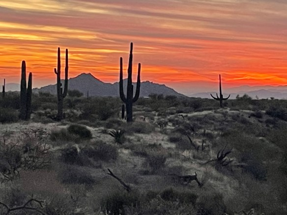 Arizona sunset saguaro