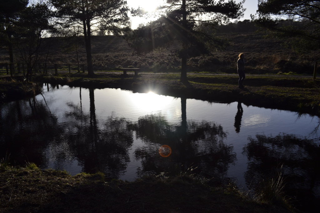 Photo of small pool on Cannock Chase