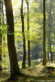 Herbst_Blätter_Feldberg_20141004-10