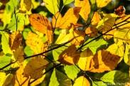 Herbst_Blätter_Feldberg_20141004-8