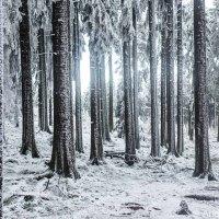 Kristalline Installationen des Winters (I)  Crystalline installations of winter (I)