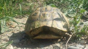 42 Schldkröte am Tümpel