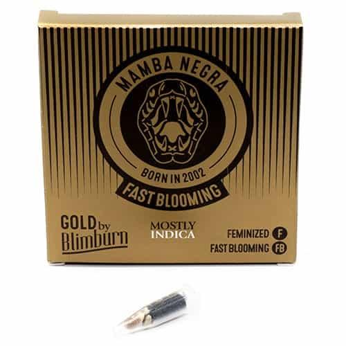 FAST BLOOWING MAMBA NEGRA cannabis seeds pack