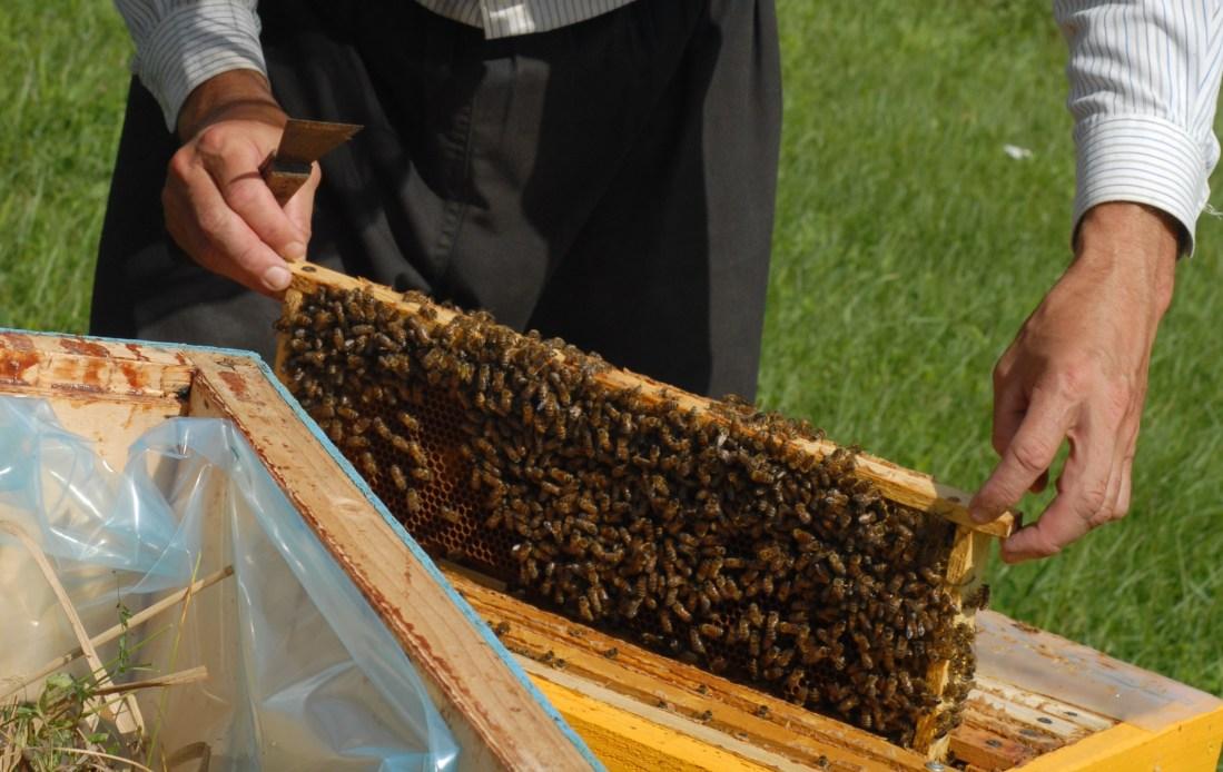 Bitės medų neša sau