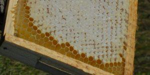 medus surūgo