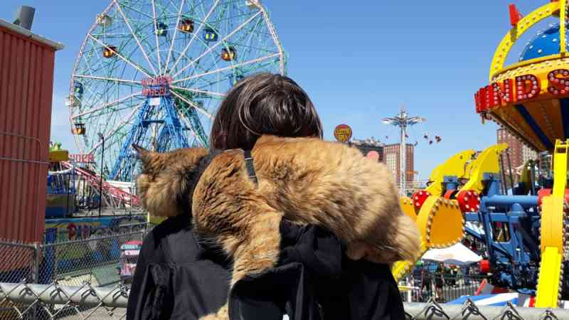 Cat on someone's shoulders looking at the Wonder Wheel out at Coney Island