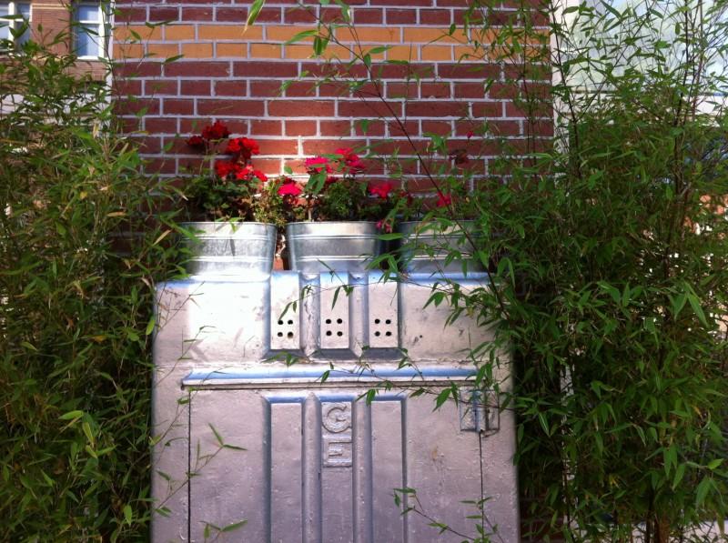 geraniums-karel-doormanstraat