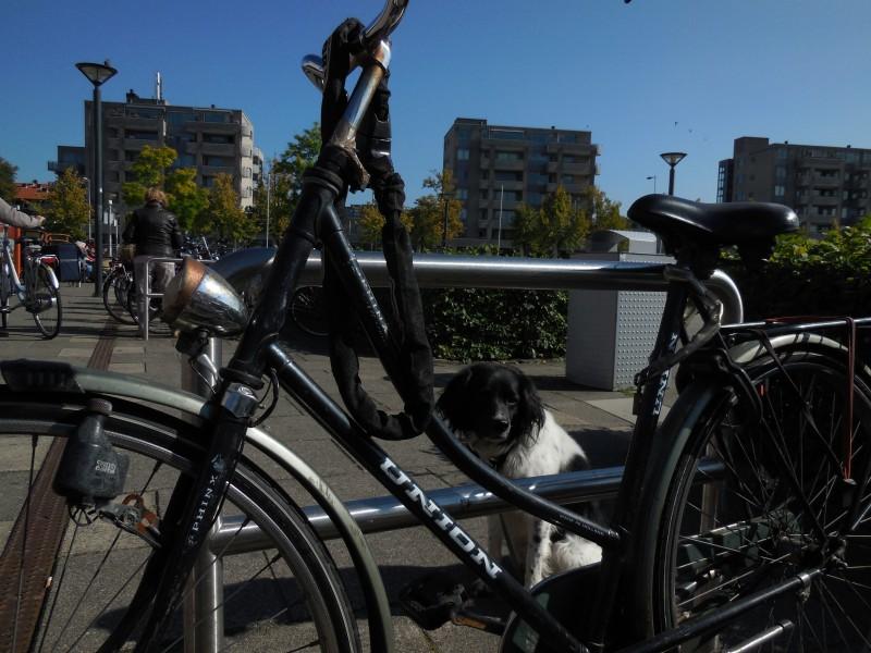 hond-fiets-sierplein