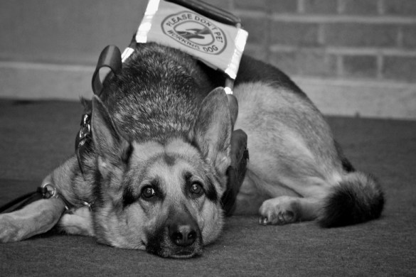 guide_dog_bfc_featured_01