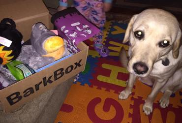 BarkBox For Frances: How To Thank Your Guide Dog