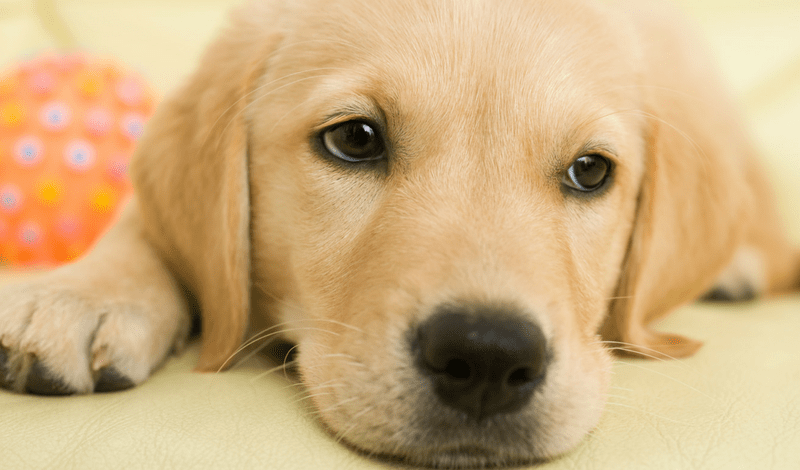 Blind Motherhood Answers: Guide Dog Applications FAQ's