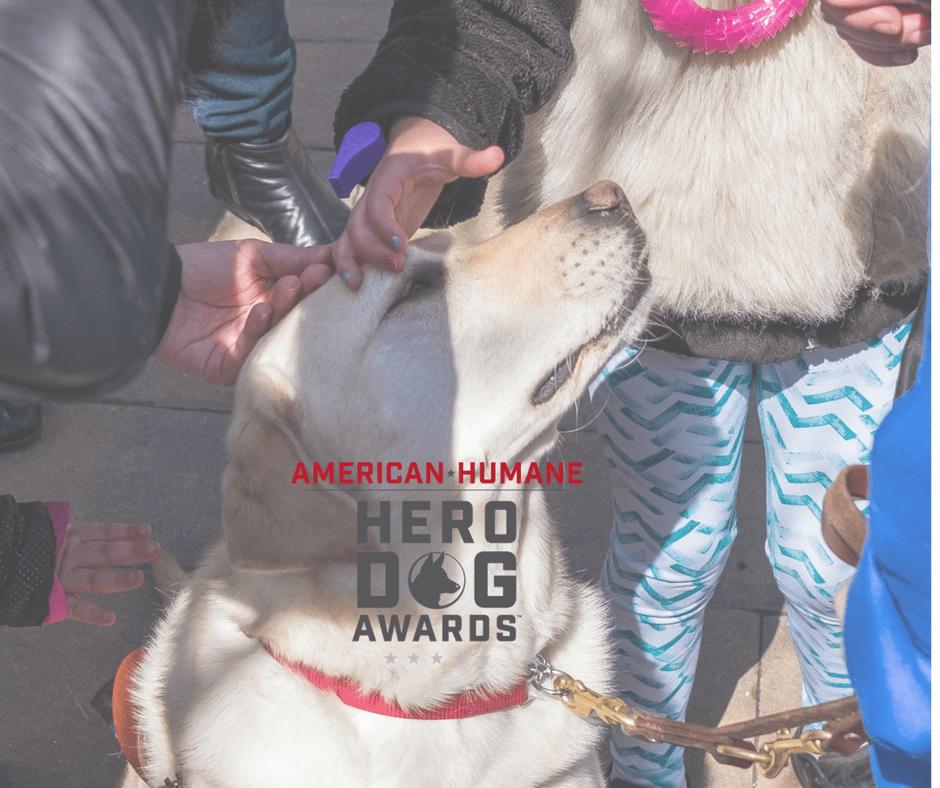 Guide Dog Frances & 2018 American Humane Hero Dog Award