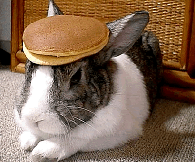 A Rabbit With Some Pancakes on it's Head