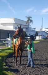I loved the impression Strayana made in the paddock. She had the poise of a supermodel.