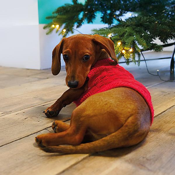 Lucile Blismas puppy