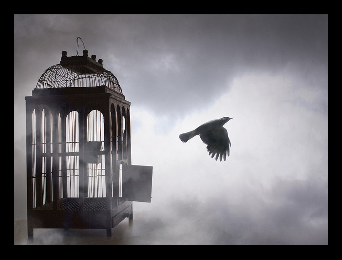 The Human Soul Is Like A Bird That Is Born In A Cage: Stepping Out Of A Box, Singing