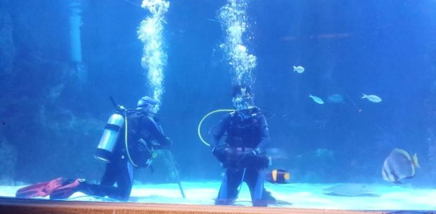 Diving with sharks at the Newport Aquarium