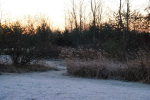 For Christmas vacation, I'll probably see some frost and snow, like is shown here: grass and some trees and cattails, covered in frost.