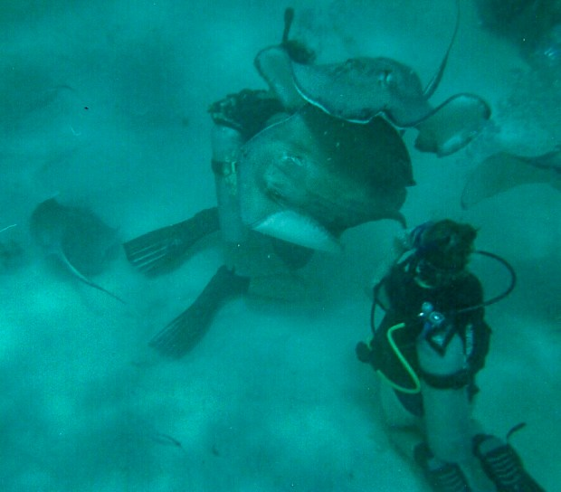 Two divers (me on the right), interacting with stingrays at stingrays city in Grand Cayman Island. It is an activity I now regret.