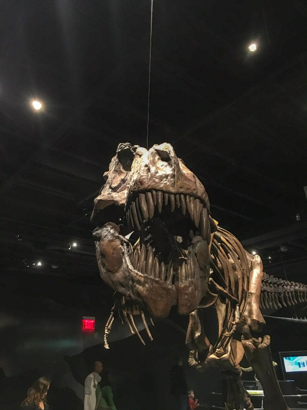A cast of a T. Rex skeleton in the dinosaur exhibit at COSI in Columbus, Ohio.