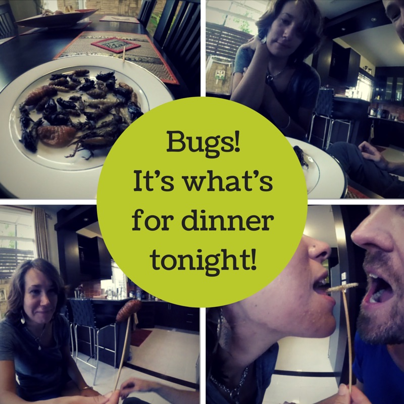 Would You Eat Bugs For Glory?
