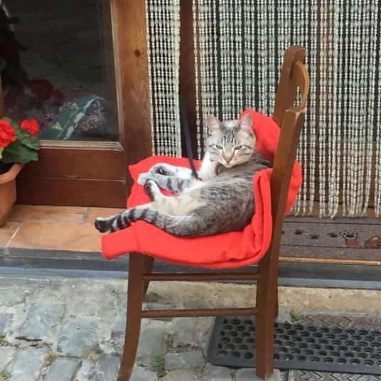 Mercatellian cat 2