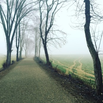 our foggy view