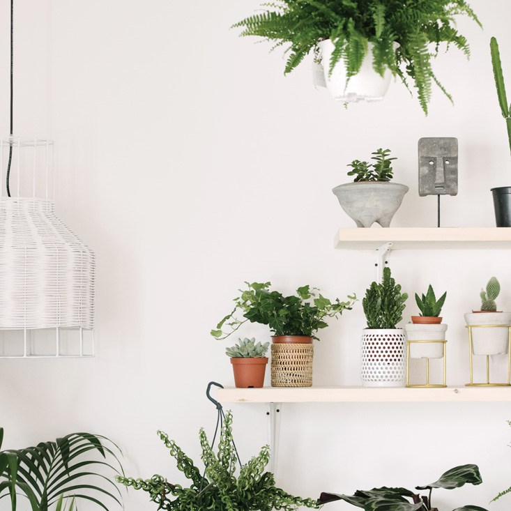 Home & Soul, Plants on shelf
