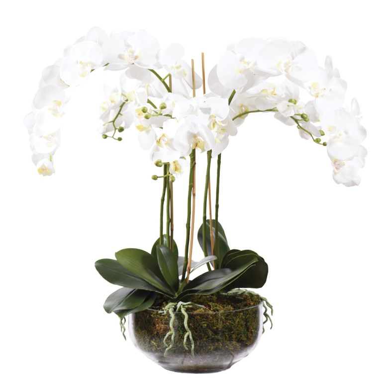 Orchid Arrangement in Glass Vase White
