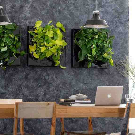 Green walls can spice up your workspace